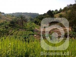 Covid-19/Kinshasa : l'agriculture, meilleure activité pendant la crise sanitaire ! 1