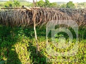 Kinshasa : à kimwenza, 90% des activités sont consacrées aux maraîchers 1