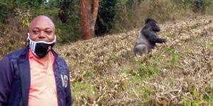 Sud-Kivu : Sweddy Basila ministre provincial du tourisme, relance les activités touristiques des la province au parc national de Kahuzi Bienga 1