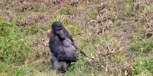 Sud-Kivu : Sweddy Basila ministre provincial du tourisme, relance les activités touristiques des la province au parc national de Kahuzi Bienga 2